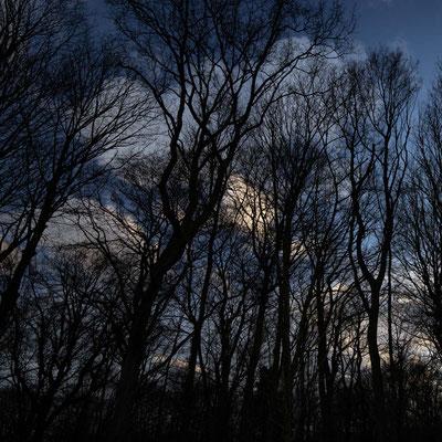 Bild 6: Bäume vor Abendhimmel