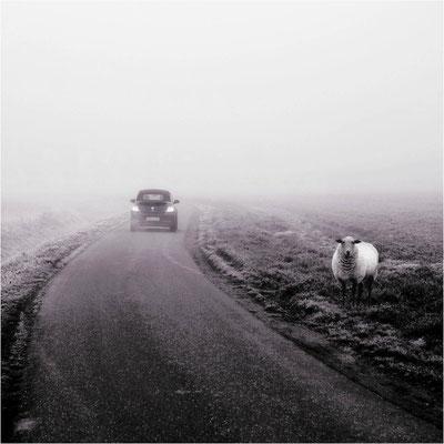 Bild 1 - Nebelmorgen am Niederrhein