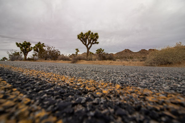 Bild 6 - Joshua Tree Road