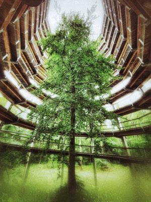 Bild 11: Baum im Turm