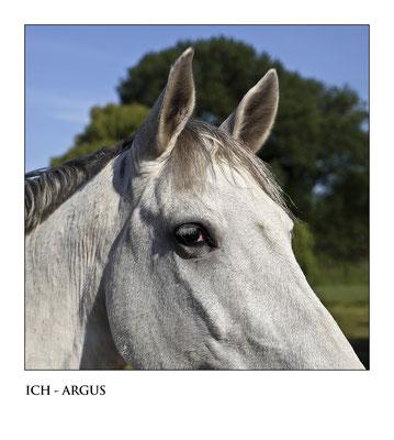 Bild 3: ICH ARGUS