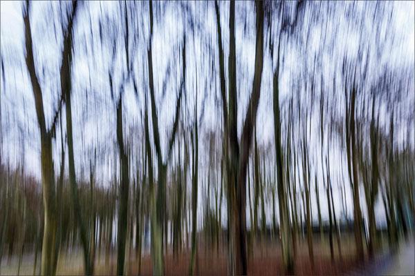 Bild 8- Bäume