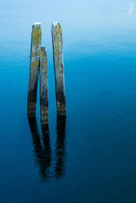 Bild 3: Holz im Wasser