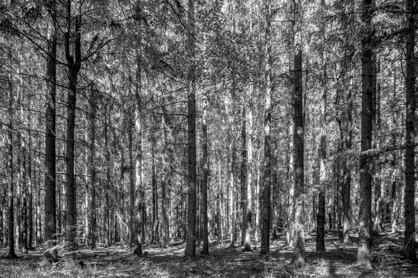 Bild 8: Sonne im Wald