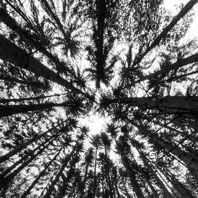 Bild 4: Blick nach oben