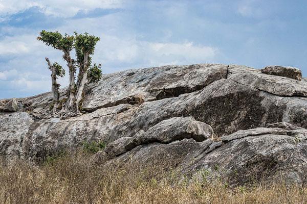 Bild 4: Leben im Stein