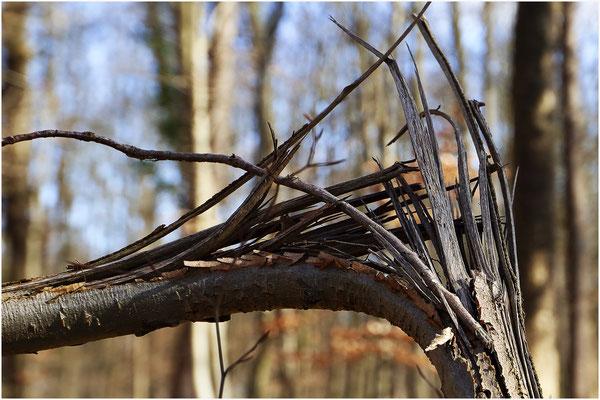 Bild 9: zerstörte Natur