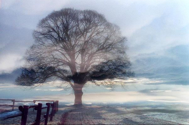 Bild 11 - Baum