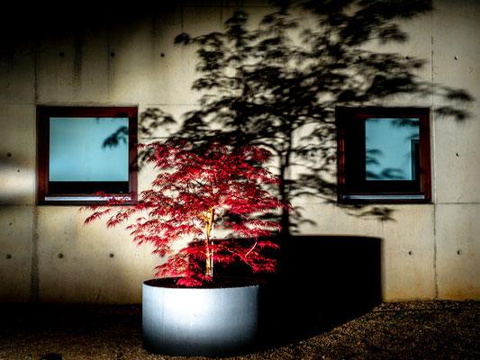 Bild 6 - Rot bei Nacht