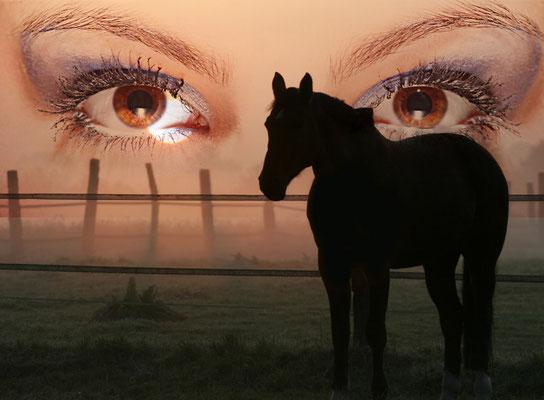 Bild 11 - Pferd