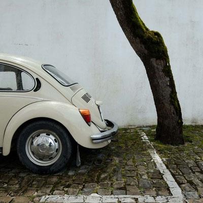 Bild 11 - Käfer