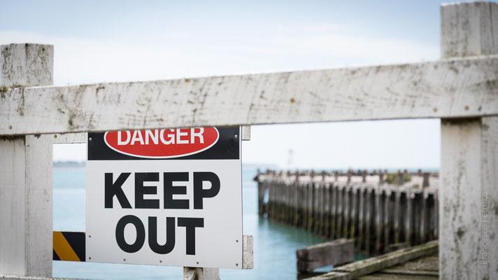 Colonia di Otare Orsine su un vecchio molo abbandonato - Oamaru - New Zealand - Nuova Zelanda