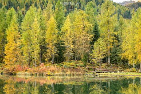 autunno dolomiti passo san pellegrino