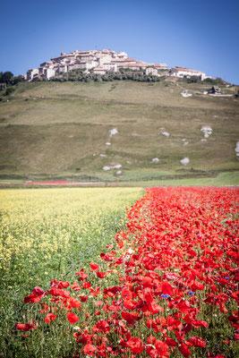 Umbria - Castelluccio di Norcia è famoso per la fioritura delle lenticchie che ogni anno attira centinaia di turisti