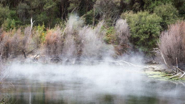 Parco termale a Rotorua - New Zealand - Nuova Zelanda