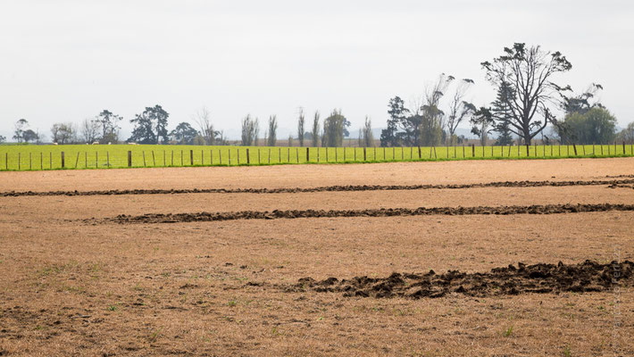 Campi coltivati - New Zealand - Nuova Zelanda