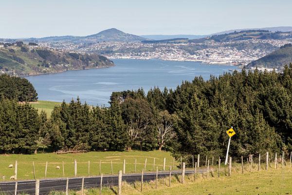 Dunedin - Otago Peninsula - New Zealand - Nuova Zelanda