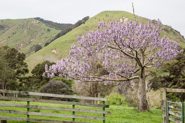 Primavera in Nuova Zelanda