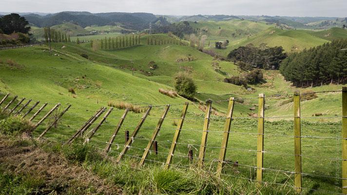 La campagnia in Nuova Zelanda