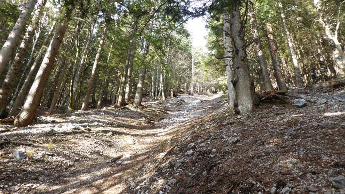 Unterer Einstieg Rinne vom Steig zur Alpensöhnehütte