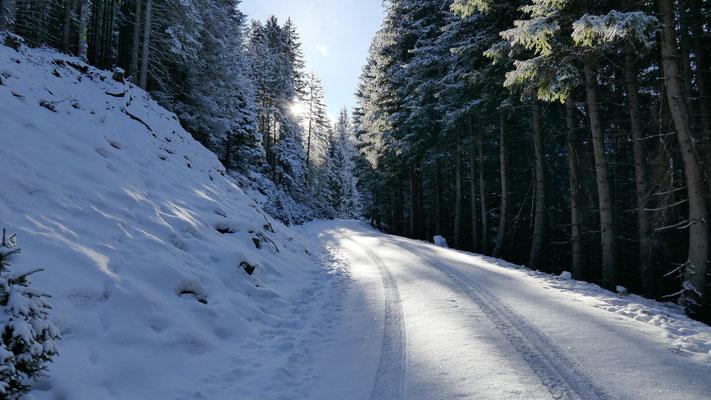 Auf 1.200m vergleichsweise dünne Schneedecke, unterwegs auf diversen Forstwegen