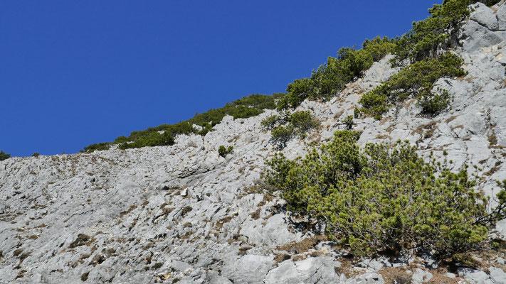 Steile Schrofen