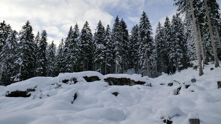 ab 1.400m auch im Wald üppige Schneelage