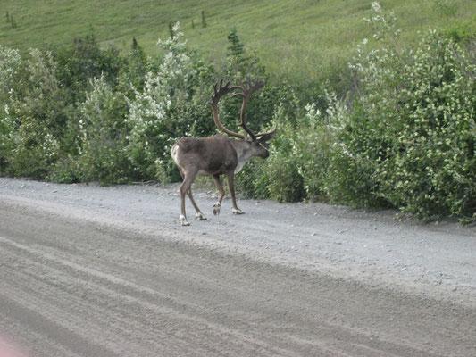 07.-22.08.2003 Alaska