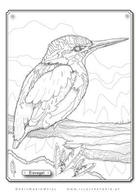 Eisvogel - Malbild - Vektorgrafik - Doris Maria Weigl
