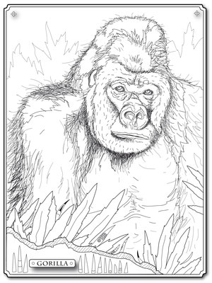 Illustrationen Doris Maria Weigl / Gorilla Malbuch Farbenzeit