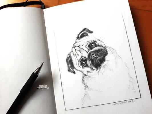 "Illustration - Tierportrait - ""Cäsar"" - Doris Maria Weigl"