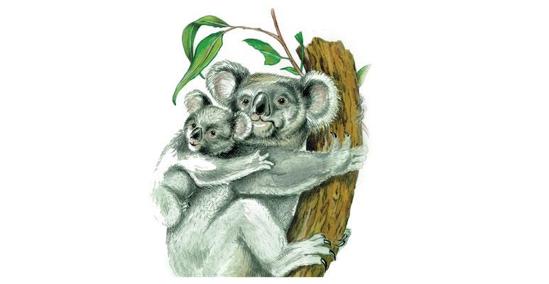 Illustrationen Doris Maria Weigl / Tiere / Koala