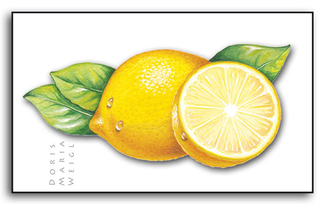 Zitrone - Aquarell - Illustrationen Doris Maria Weigl / Menü