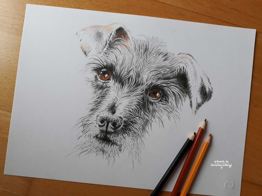 "Illustration - Tierportrait - ""Sophie"" - Farbstift und Kohle - Doris Maria Weigl"