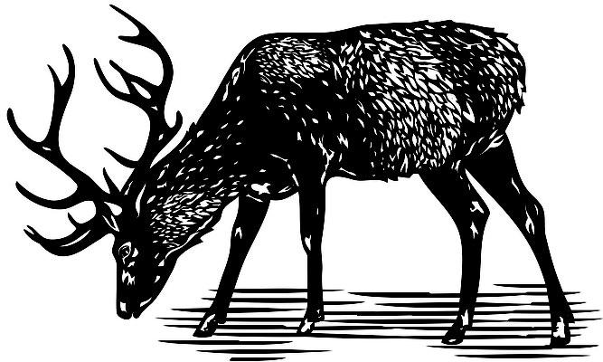 Illustrationen Doris Maria Weigl / Tiere / Hirsch