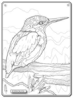 Illustrationen Doris Maria Weigl / Eisvogel Malbuch Farbenzeit