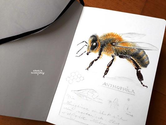 "Sketchbook - Illustration - Doris Maria Weigl - ""Biene"""