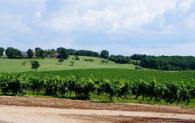 Château Paillas vineyard in Floressas