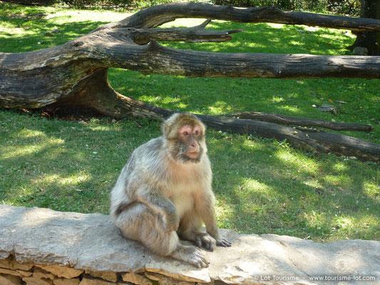 La forêt des singes à Rocamadour