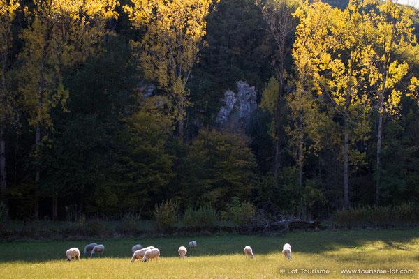 The Causse du Quercy natural park