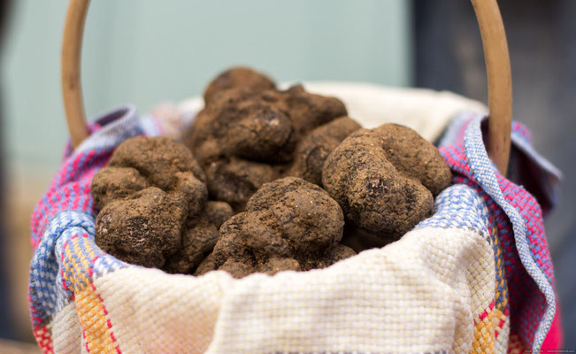 Black truffle from Lalbenque