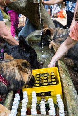Auch die Hunde waren durstig :)