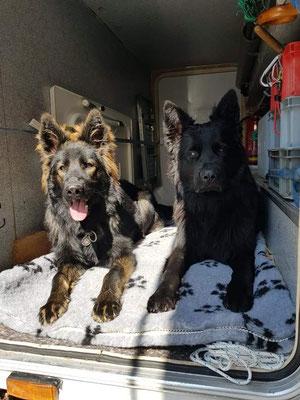 Dark mit ihrem Freund Shadow