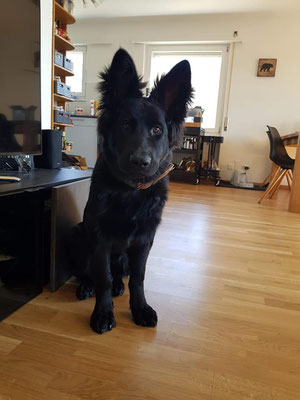 Sam mit 5 Monaten