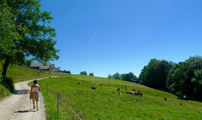 Auf dem Weg zum Stierenberg