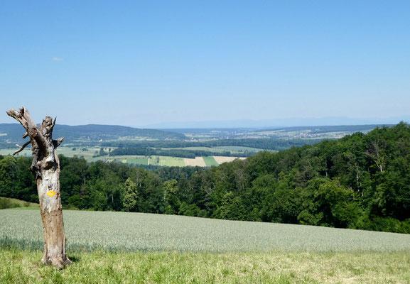 Blick über das Sundgau