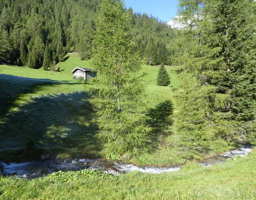 Schöne Almwiesen