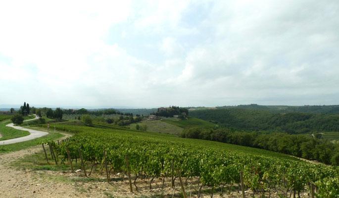 Blick bei der Eiche Richtung Lucignano
