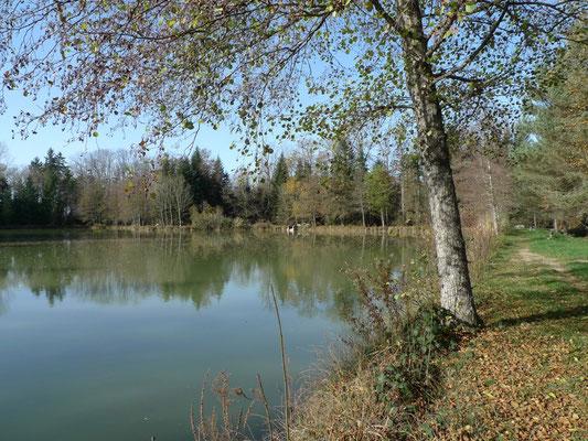 Weiher im Wald von La Montoie