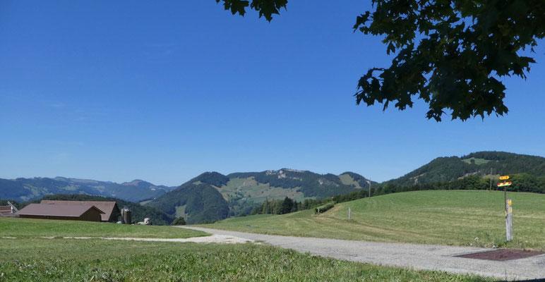 Blick oberhalb Hinterhauberg Richtung Westen